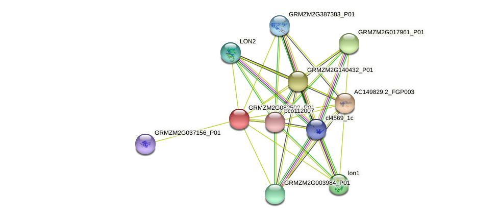 GRMZM2G082502_P01 protein (Zea mays) - STRING interaction network