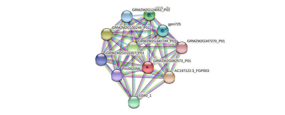 GRMZM2G082573_P01 protein (Zea mays) - STRING interaction network
