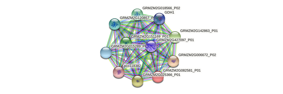 GRMZM2G082581_P01 protein (Zea mays) - STRING interaction network