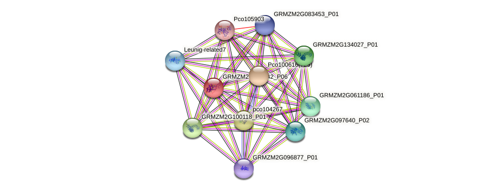 GRMZM2G082642_P02 protein (Zea mays) - STRING interaction network