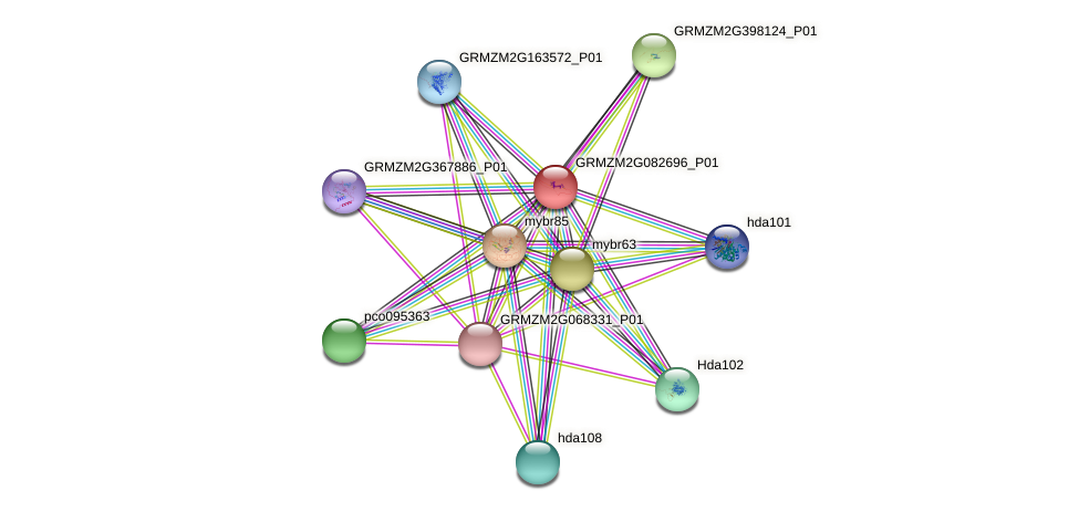 GRMZM2G082696_P01 protein (Zea mays) - STRING interaction network
