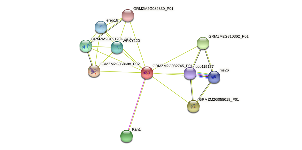 GRMZM2G082745_P01 protein (Zea mays) - STRING interaction network
