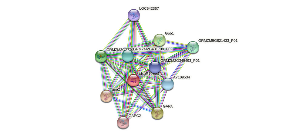 Zm.42367 protein (Zea mays) - STRING interaction network