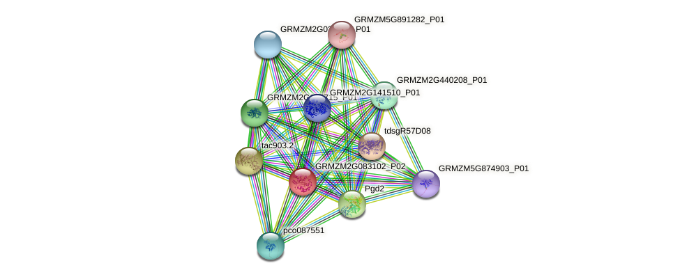 GRMZM2G083102_P02 protein (Zea mays) - STRING interaction network