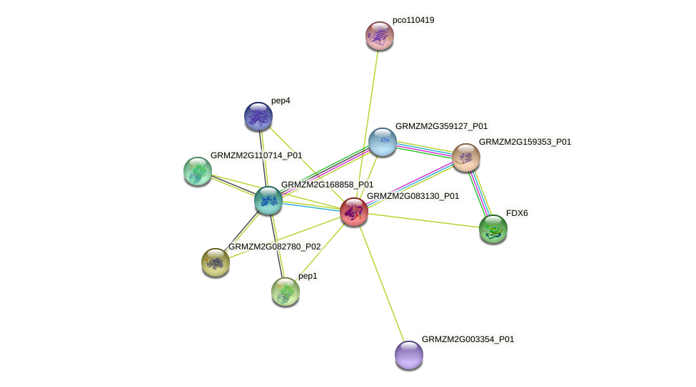 GRMZM2G083130_P01 protein (Zea mays) - STRING interaction network