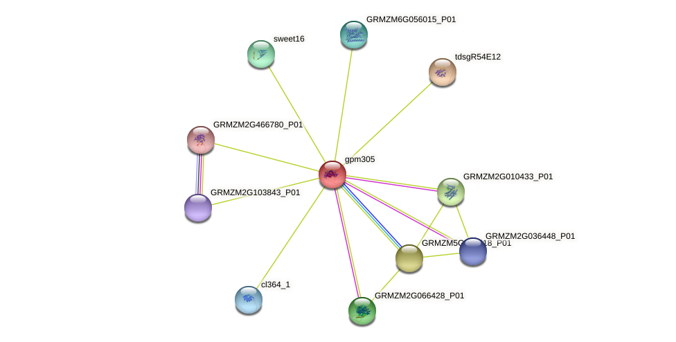 gpm305 protein (Zea mays) - STRING interaction network