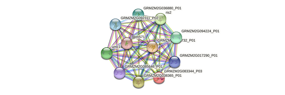 GRMZM2G083344_P03 protein (Zea mays) - STRING interaction network