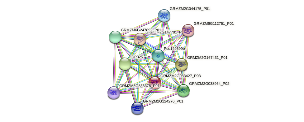 GRMZM2G083427_P03 protein (Zea mays) - STRING interaction network