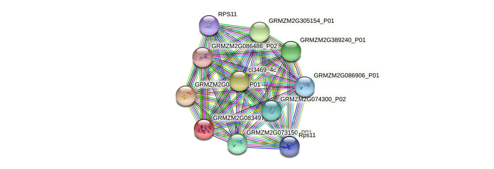 GRMZM2G083497_P04 protein (Zea mays) - STRING interaction network
