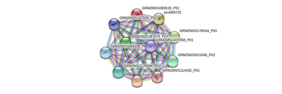 GRMZM2G083518_P01 protein (Zea mays) - STRING interaction network