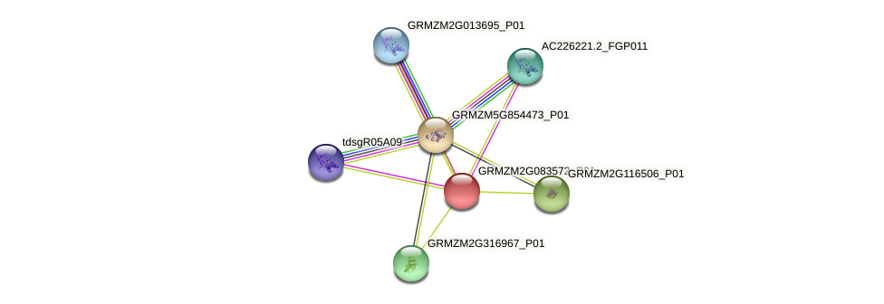 GRMZM2G083572_P01 protein (Zea mays) - STRING interaction network