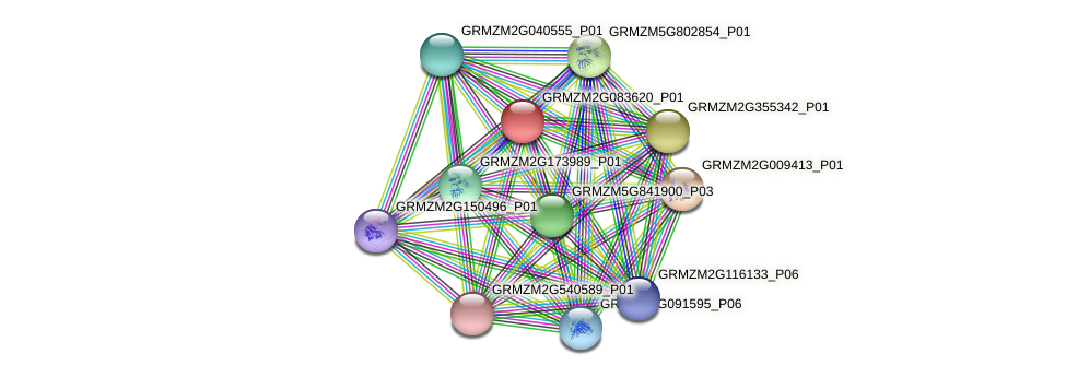 GRMZM2G083620_P01 protein (Zea mays) - STRING interaction network