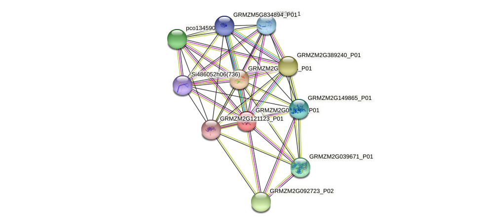 GRMZM2G083745_P01 protein (Zea mays) - STRING interaction network