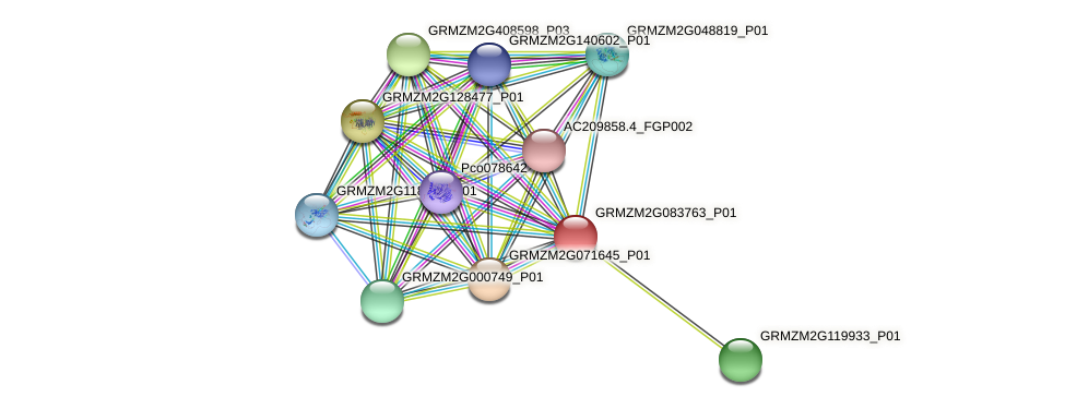 GRMZM2G083763_P01 protein (Zea mays) - STRING interaction network