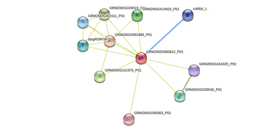 GRMZM2G083812_P01 protein (Zea mays) - STRING interaction network