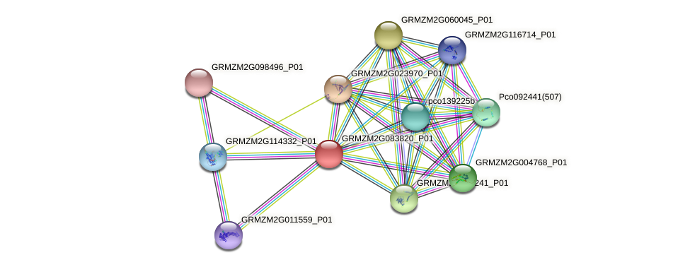 GRMZM2G083820_P01 protein (Zea mays) - STRING interaction network