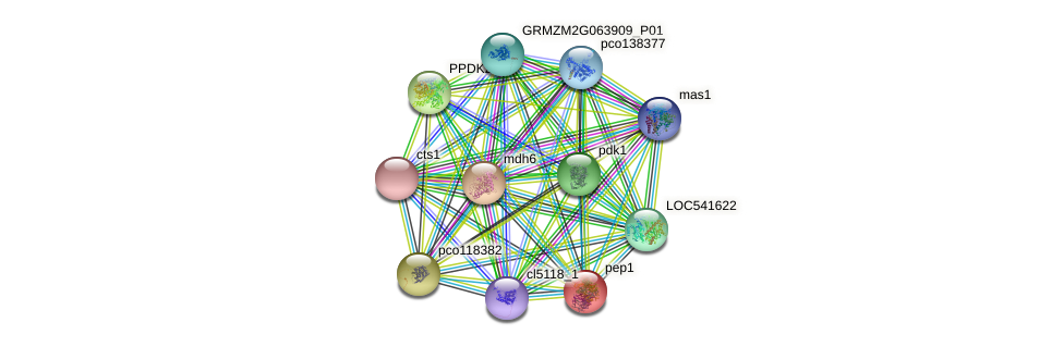 PEP1 protein (Zea mays) - STRING interaction network