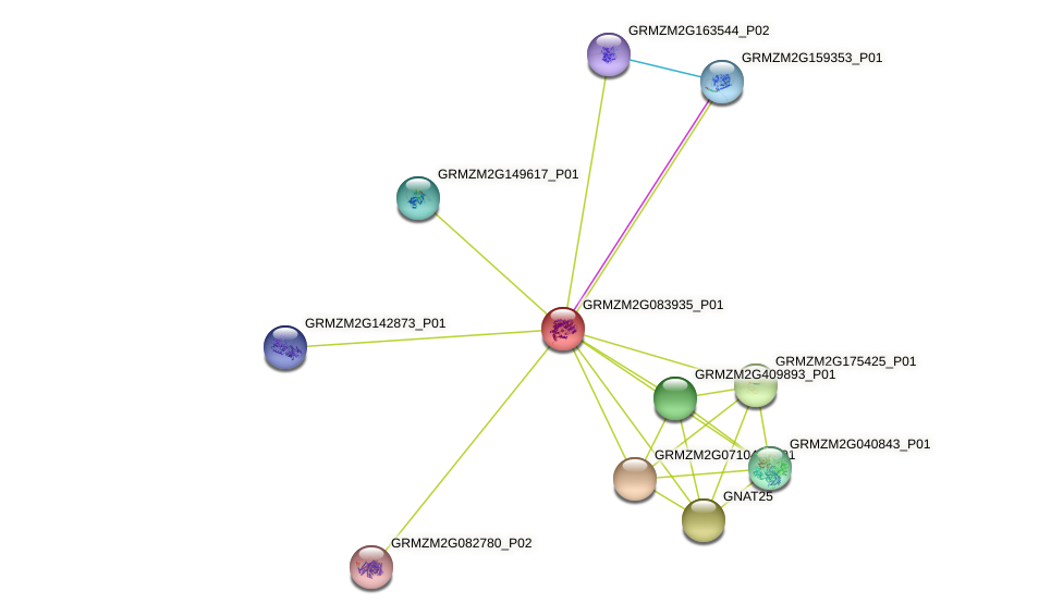 GRMZM2G083935_P01 protein (Zea mays) - STRING interaction network