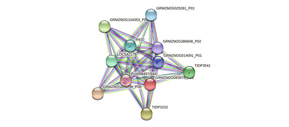 Zm.137168 protein (Zea mays) - STRING interaction network