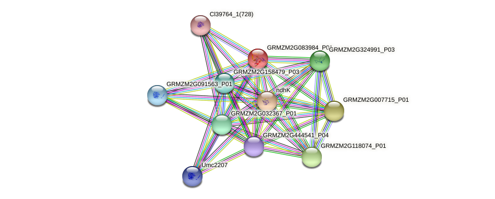 GRMZM2G083984_P01 protein (Zea mays) - STRING interaction network