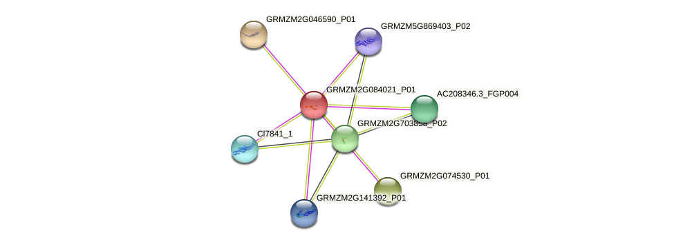 GRMZM2G084021_P01 protein (Zea mays) - STRING interaction network