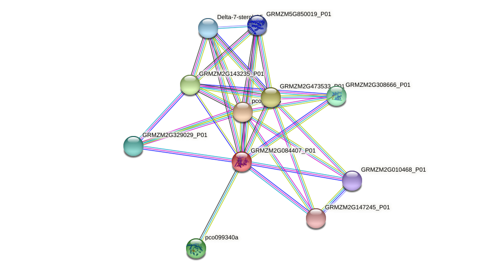 Zm.96696 protein (Zea mays) - STRING interaction network