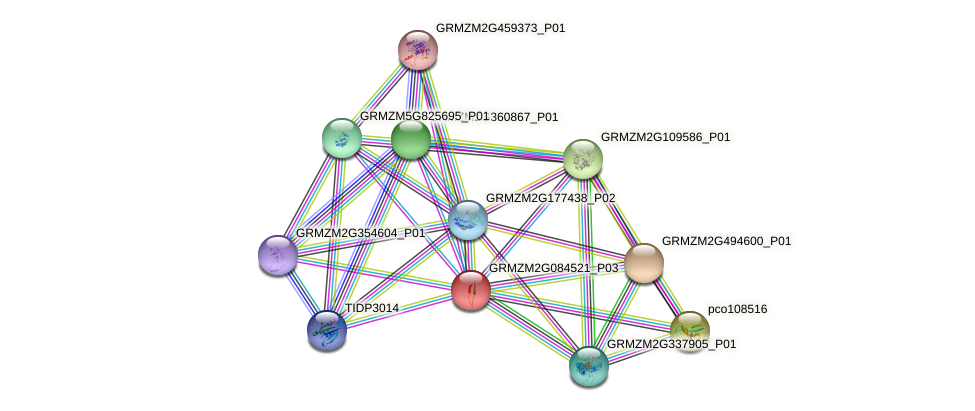 GRMZM2G084521_P03 protein (Zea mays) - STRING interaction network