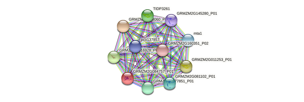 GRMZM2G084757_P01 protein (Zea mays) - STRING interaction network