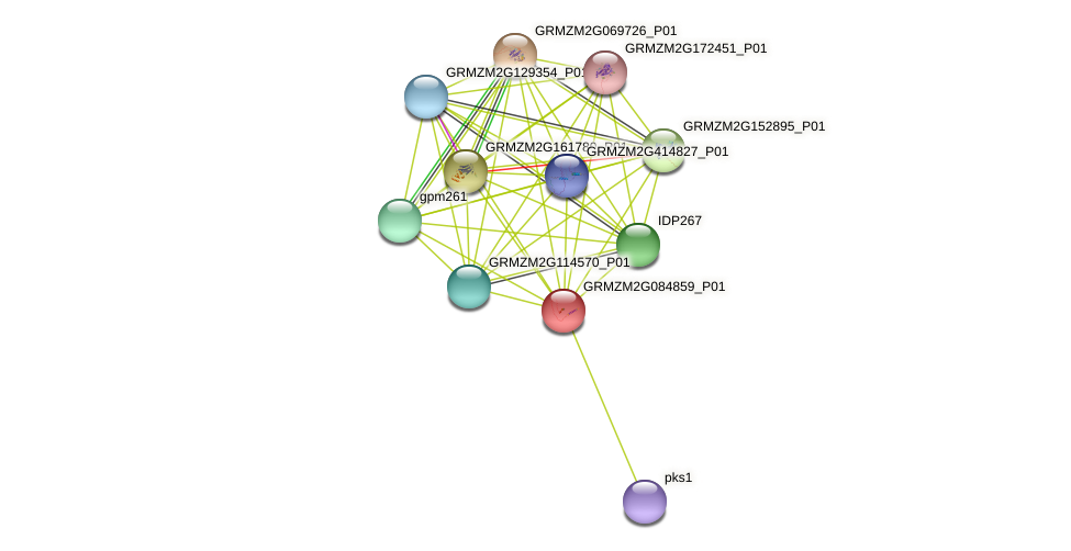 103639401 protein (Zea mays) - STRING interaction network