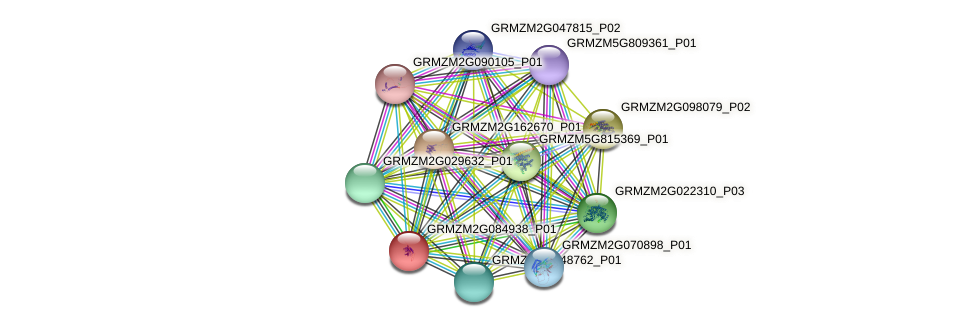 GRMZM2G084938_P01 protein (Zea mays) - STRING interaction network