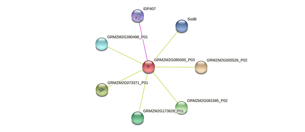 GRMZM2G085000_P03 protein (Zea mays) - STRING interaction network