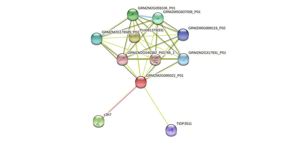 GRMZM2G085022_P01 protein (Zea mays) - STRING interaction network