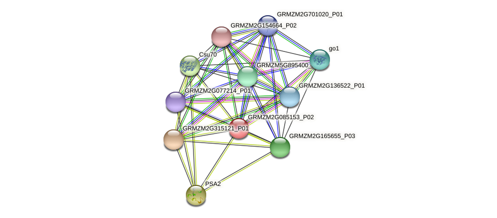 GRMZM2G085153_P02 protein (Zea mays) - STRING interaction network