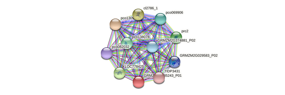 GRMZM2G085243_P01 protein (Zea mays) - STRING interaction network
