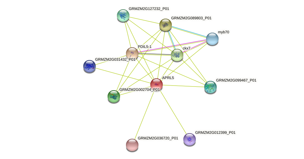 APRL5 protein (Zea mays) - STRING interaction network