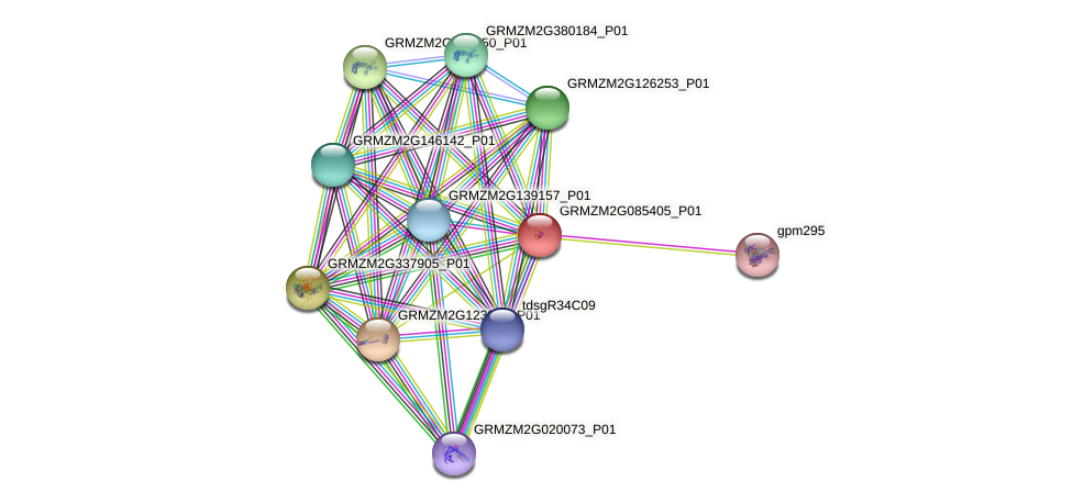 GRMZM2G085405_P01 protein (Zea mays) - STRING interaction network