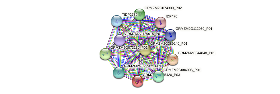 GRMZM2G085420_P03 protein (Zea mays) - STRING interaction network