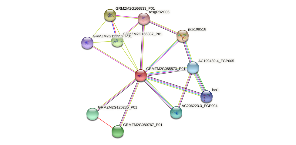GRMZM2G085573_P01 protein (Zea mays) - STRING interaction network