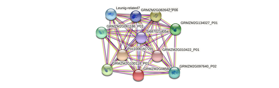 Zm.127573 protein (Zea mays) - STRING interaction network