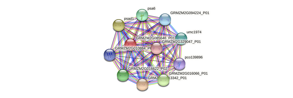 GRMZM2G085646_P01 protein (Zea mays) - STRING interaction network
