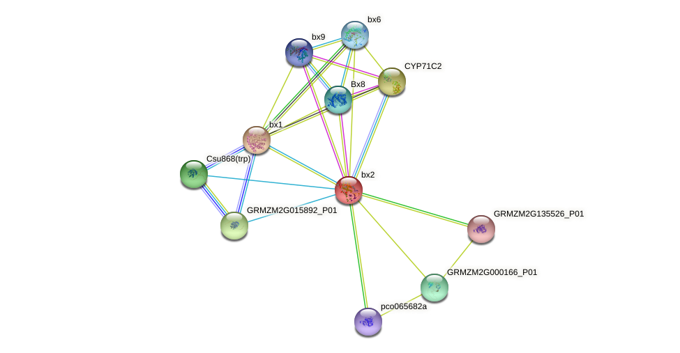 CYP71C4 protein (Zea mays) - STRING interaction network