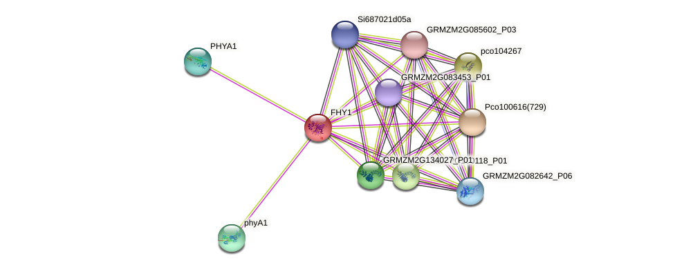 GRMZM2G085713_P01 protein (Zea mays) - STRING interaction network