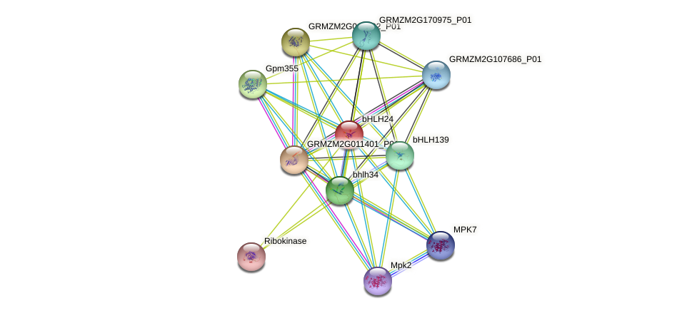 bHLH24 protein (Zea mays) - STRING interaction network