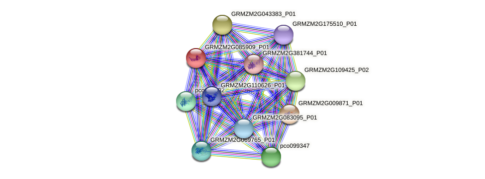 GRMZM2G085909_P01 protein (Zea mays) - STRING interaction network