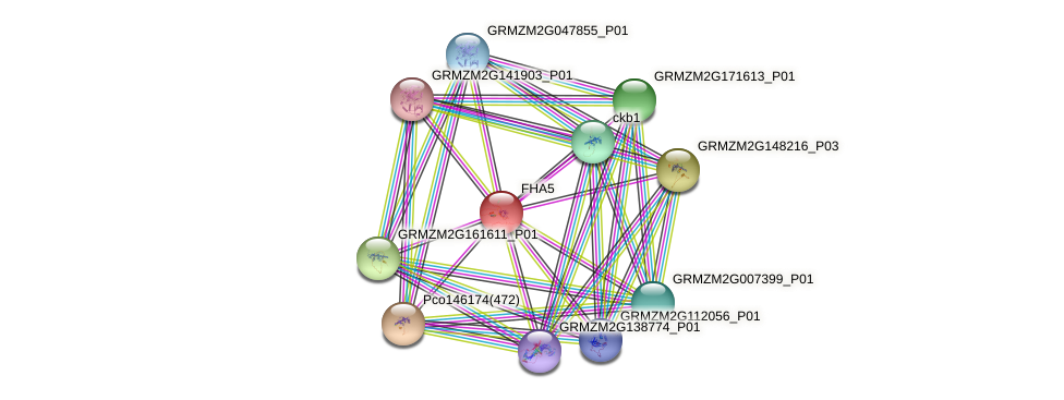 FHA5 protein (Zea mays) - STRING interaction network