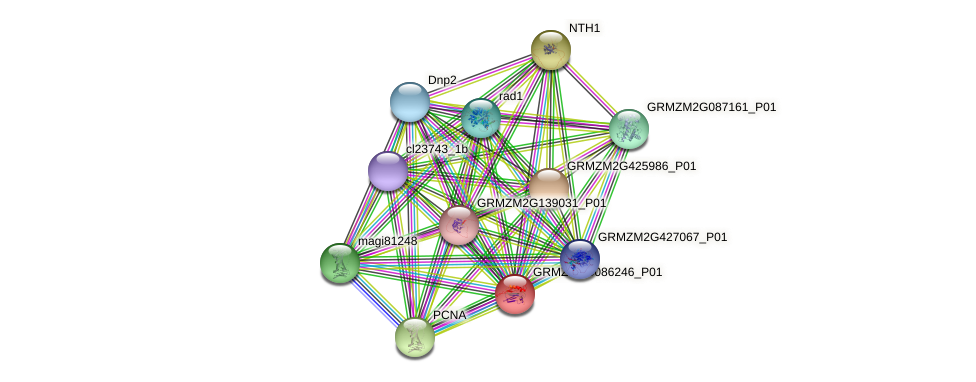 GRMZM2G086246_P01 protein (Zea mays) - STRING interaction network