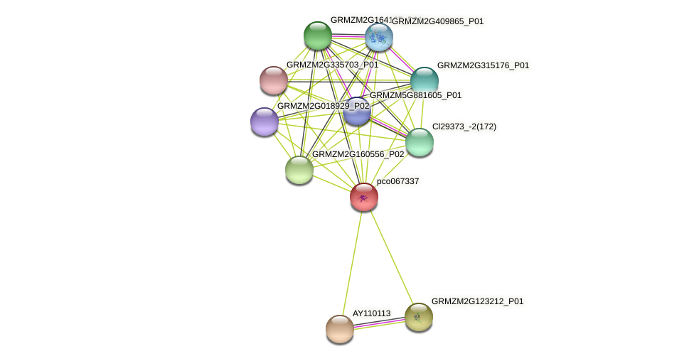 pco067337 protein (Zea mays) - STRING interaction network