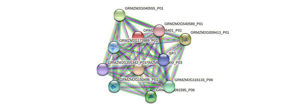 GRMZM2G086401_P01 protein (Zea mays) - STRING interaction network