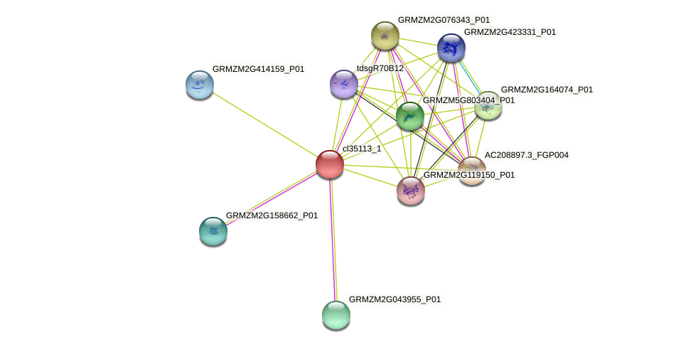 cl35113_1 protein (Zea mays) - STRING interaction network