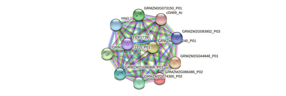 Zm.85881 protein (Zea mays) - STRING interaction network